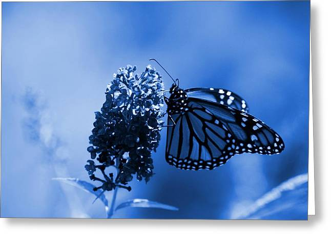Sunlight On Flowers Greeting Cards - Butterfly In Blue Greeting Card by Angie Tirado