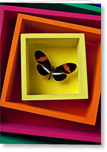Insert Greeting Cards - Butterfly in box Greeting Card by Garry Gay
