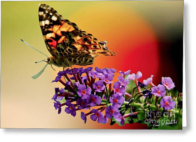 Gold Lime Green Greeting Cards - Butterfly in the Sunset Greeting Card by Carol F Austin