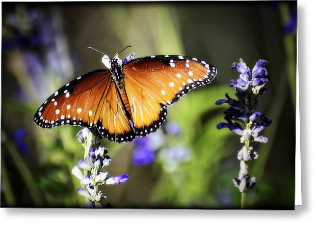 Queen Butterfly Greeting Cards - Butterfly Kisses Greeting Card by Saija  Lehtonen