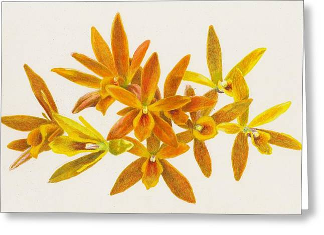 Epiphyte Drawings Greeting Cards - Butterfly Kisses Greeting Card by Steve Asbell