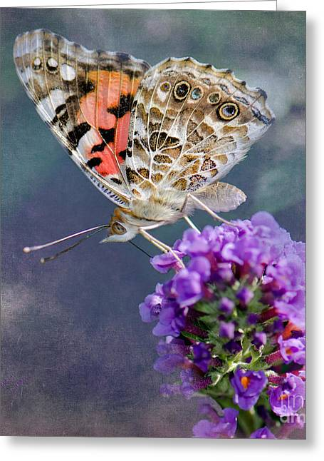 Painted Lady Butterflies Greeting Cards - Butterfly Love Greeting Card by Betty LaRue