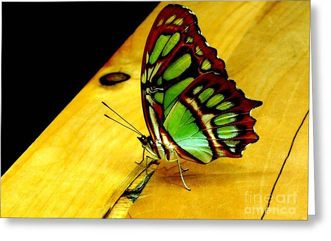 San Francisco Cali Greeting Cards - Butterfly Greeting Card by Mike Grubb
