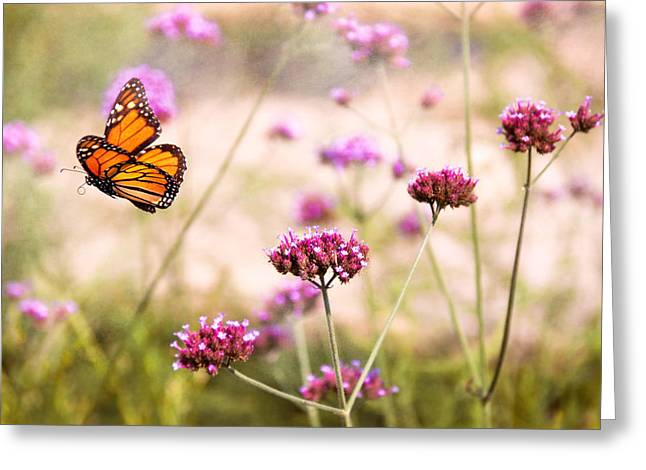 Lepidopterist Greeting Cards - Butterfly - Monarach - The sweet life Greeting Card by Mike Savad