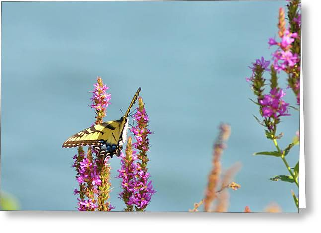 Butterfly Morning Greeting Card by Bill Cannon