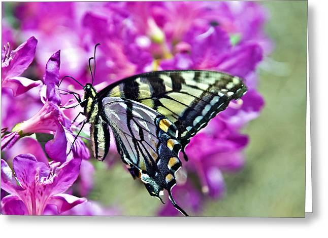 Susan Leggett Greeting Cards - Butterfly on Azalea Greeting Card by Susan Leggett