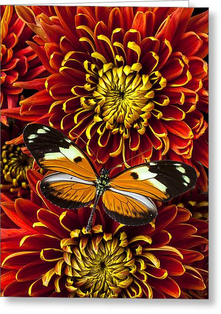 Antenna Greeting Cards - Butterfly on spider mums Greeting Card by Garry Gay