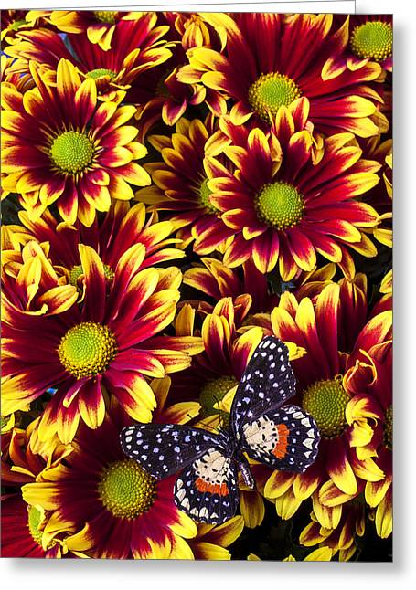 Red Bouquet Greeting Cards - Butterfly on yellow red daises  Greeting Card by Garry Gay