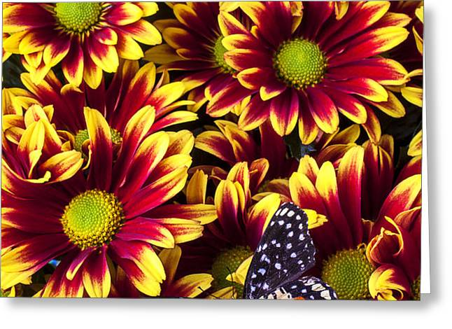 Butterfly on yellow red daises  Greeting Card by Garry Gay