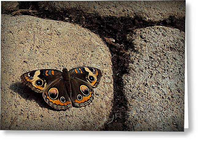 Butterflies Pyrography Greeting Cards - Butterfly Greeting Card by Penny Johnson