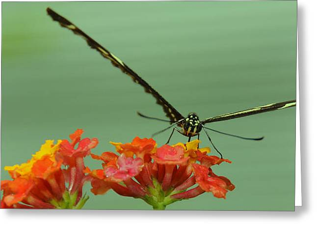 Takeoff Greeting Cards - Butterfly Ready for Takeoff  Greeting Card by Dennis Clark