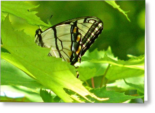 Lush Mixed Media Greeting Cards - Butterfly Rest In The Leaves Greeting Card by Debra     Vatalaro