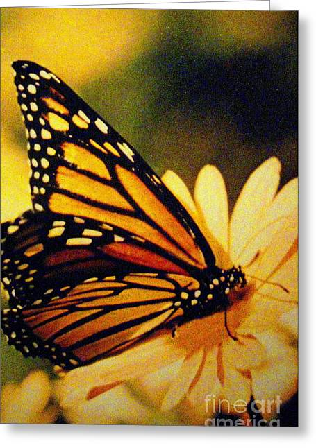 Shasta Eone Greeting Cards - Butterfly Greeting Card by Shasta Eone