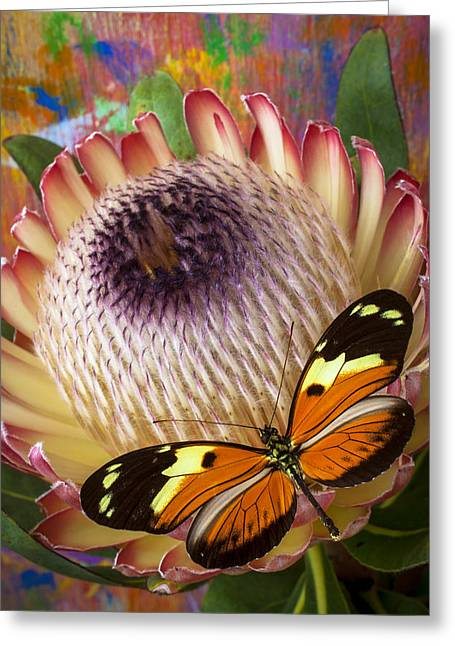 Proteas Greeting Cards - Butterfly with large protea Greeting Card by Garry Gay