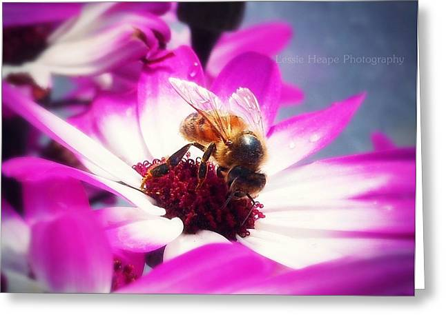Senetti Photographs Greeting Cards - Buzz Wee Bees ll Greeting Card by Lessie Heape