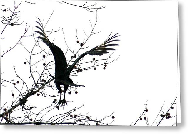 White Pyrography Greeting Cards - Buzzard Silhouette Greeting Card by Valia Bradshaw