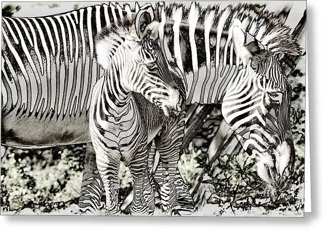 Myeress Greeting Cards - BW Zebra Greeting Card by Joe Myeress