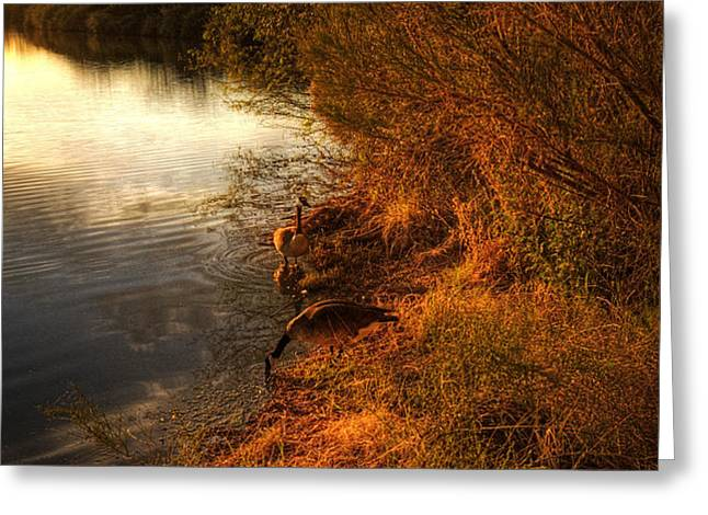 By The Evening's Golden Glow Greeting Card by Saija  Lehtonen