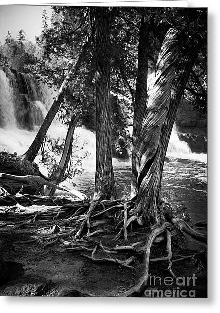 Minnesota Grown Photographs Greeting Cards - By The Falls Greeting Card by Perry Webster