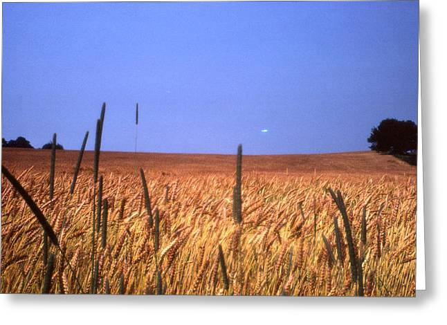 Wheat Greeting Cards - By the Highway 2 Greeting Card by Lyle Crump