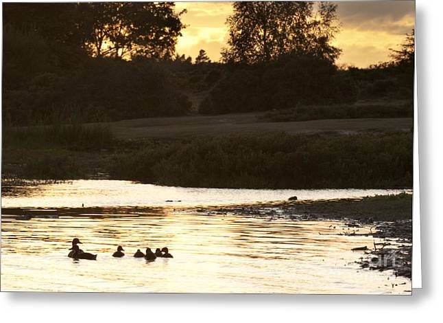 Ducklings Greeting Cards - By The Lake Greeting Card by Angel  Tarantella