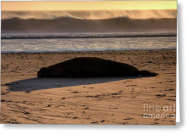 Recently Sold -  - Ano Nuevo Greeting Cards - By the Seaside Greeting Card by John Lamb