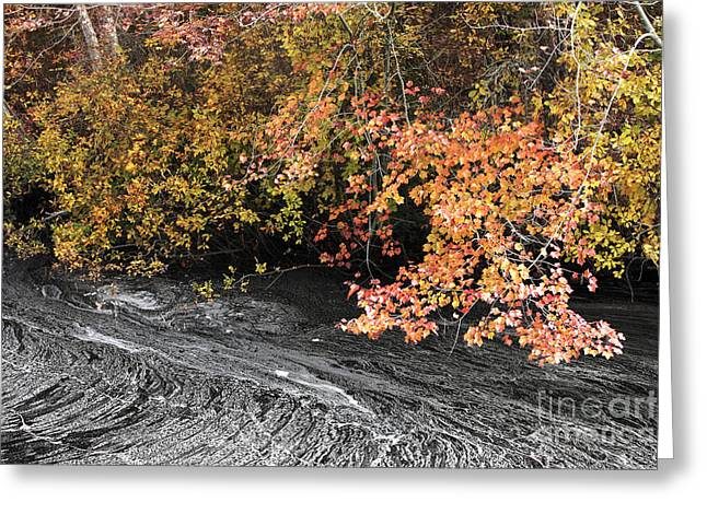 New Jersey Pine Barrens Greeting Cards - By the Stream Greeting Card by John Rizzuto