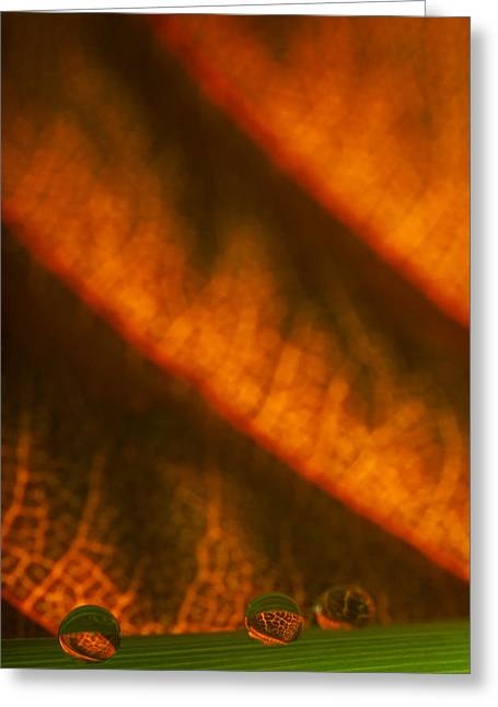 C Ribet Orbscape Slope And Tapestry Greeting Card by C Ribet