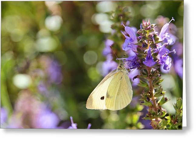Cabbage White Butterfly Greeting Cards - Cabbage White Butterfly Greeting Card by Heidi Smith