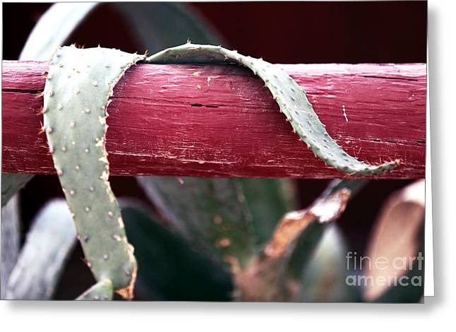 Contemporary Cowboy Gallery Greeting Cards - Cactus Arms Greeting Card by John Rizzuto
