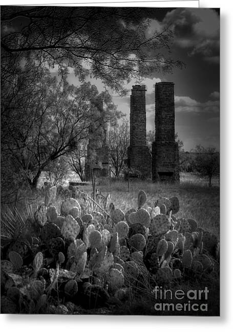 Cactus At Fort Phantom Hill Greeting Card by Fred Lassmann