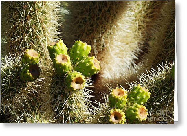 Cactus Flowers Digital Greeting Cards - Cactus Buds Greeting Card by Methune Hively