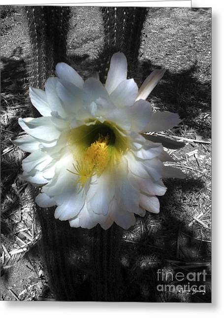 Large Flowers Greeting Cards - Cactus Flower Greeting Card by Cheryl Young