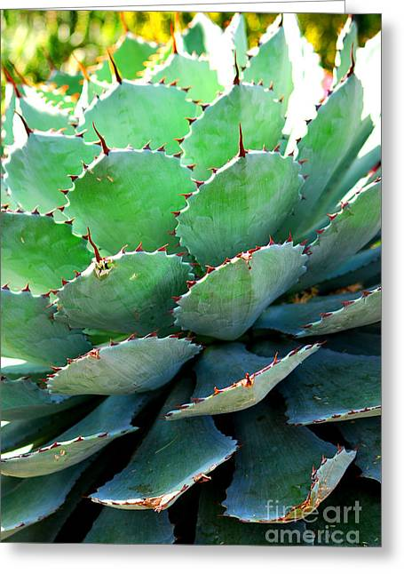 Chicago Botanic Garden Greeting Cards - Cactus I Greeting Card by Nancy Mueller
