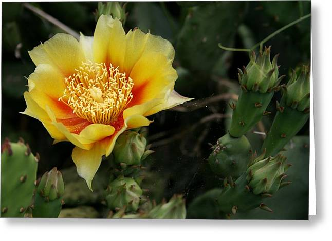 In Bloom Pyrography Greeting Cards - Cactus Splendor Greeting Card by Valia Bradshaw