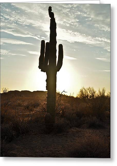 Kenny Jalet Greeting Cards - Cactus sunset Greeting Card by Kenny Jalet