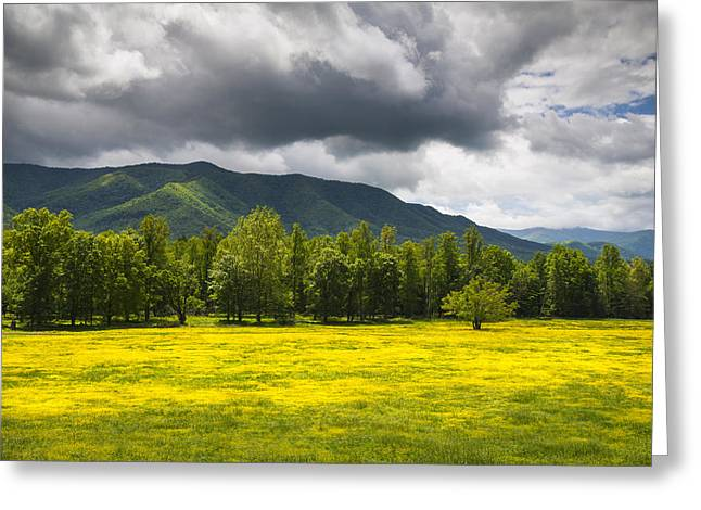 Southern Appalachians Greeting Cards - Cades Cove Great Smoky Mountains National Park TN - Fields of Gold Greeting Card by Dave Allen