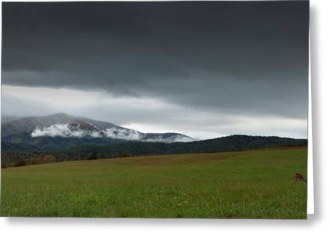 Autum Greeting Cards - Cades Cove Greeting Card by Jonas Wingfield