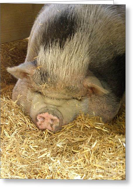Barn Yard Greeting Cards - Caillette the Pig Greeting Card by Lainie Wrightson