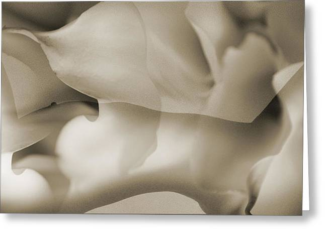 Woman Torso Photograph Greeting Cards - Cala Lilly Greeting Card by Nora Batternay