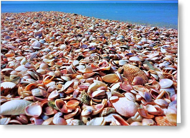Tropical Oceans Greeting Cards - Caladesi Shells I Greeting Card by Benjamin Yeager