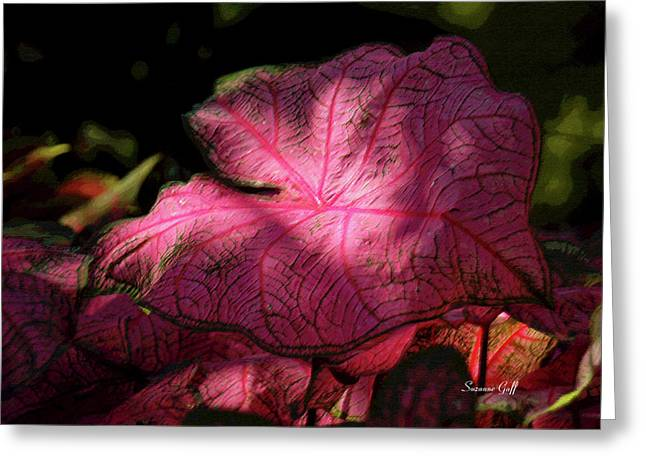 Dappled Light Greeting Cards - Caladium Mystery Greeting Card by Suzanne Gaff