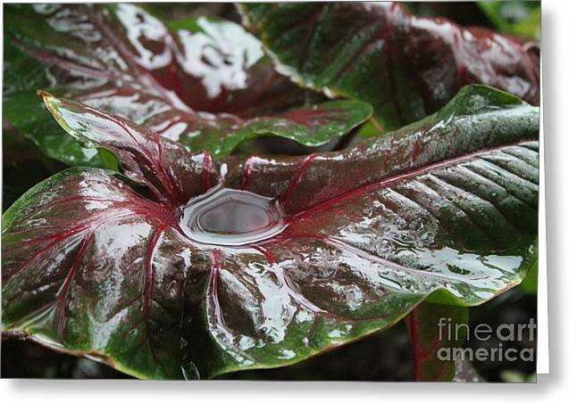 Caladium Puddle Greeting Card by Theresa Willingham