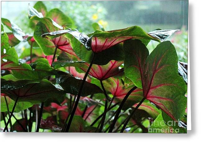 Caladiums In The Rain Greeting Card by Theresa Willingham
