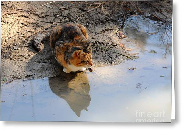 Al Powell Photography Usa Greeting Cards - Calico Cat Reflection Greeting Card by Al Powell Photography USA