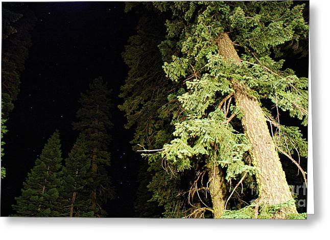 Night Scenery Greeting Cards - California Evergreens at Night Greeting Card by HD Connelly