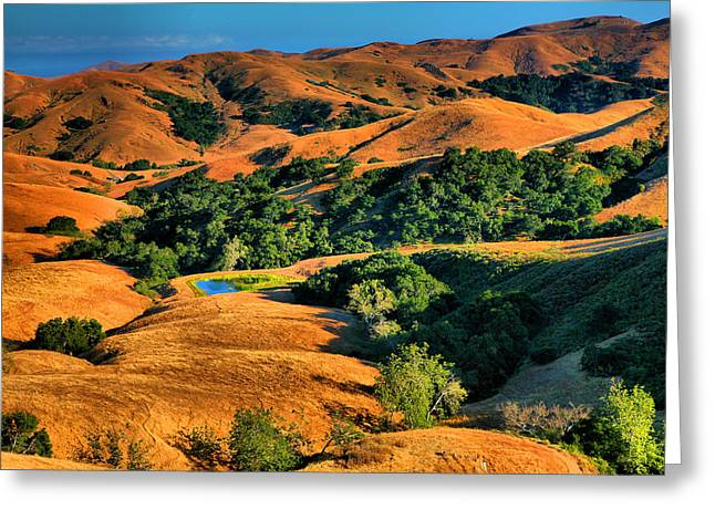 Usa Photographs Greeting Cards - California Gold Greeting Card by Steven Ainsworth