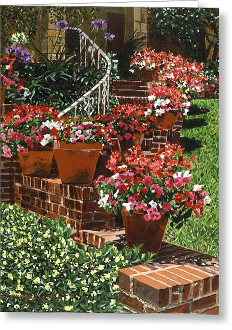 Impatiens Flowers Greeting Cards - California Impatiens Greeting Card by David Lloyd Glover