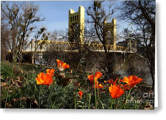 Backroads Greeting Cards - California Poppies With The Slightly Photographically Blurred Sacramento Tower Bridge In The Back Greeting Card by Wingsdomain Art and Photography