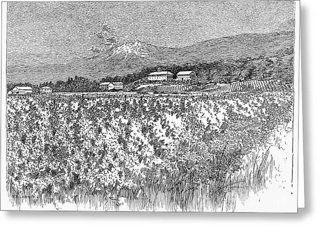 Napa Valley Vineyard Greeting Cards - California: Vineyard, 1889 Greeting Card by Granger